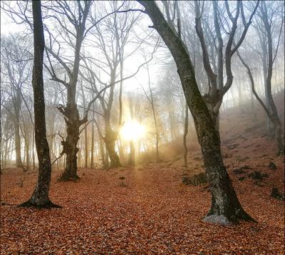 *** лес закат