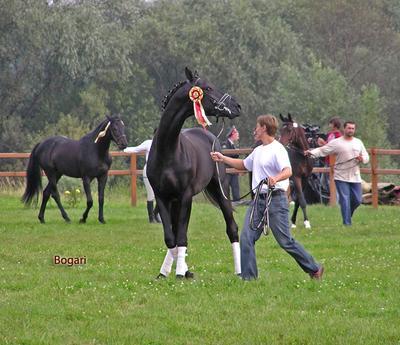 Балетное па победителя лошади