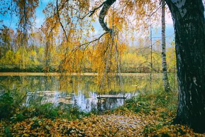 Уходит осень осень золотая уходит октябрь лес река качели