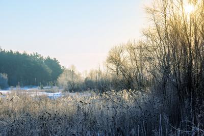 Утреннее серебро пейзаж природа зима утро снег лес сосна луг солнце Усманка Сомово