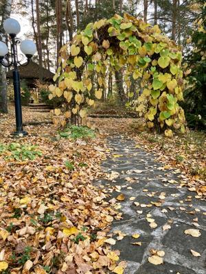 Дача. Осень