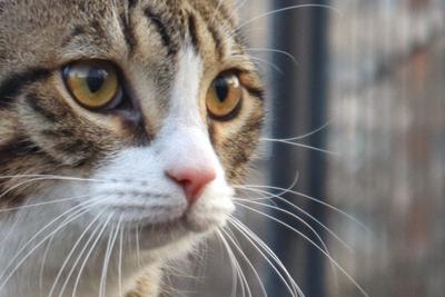 *** кот кошки кошка шлейка прогулка