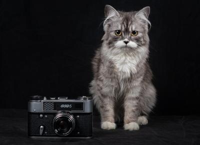 *** кошка кошечка фэд5 животные портрет