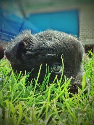 Любопытный щенок собака зеленая трава лето