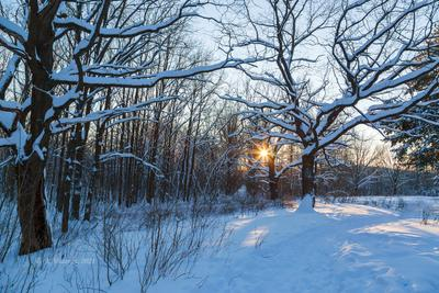 Зимнее солнце зимний пейзаж солнце закат деревья
