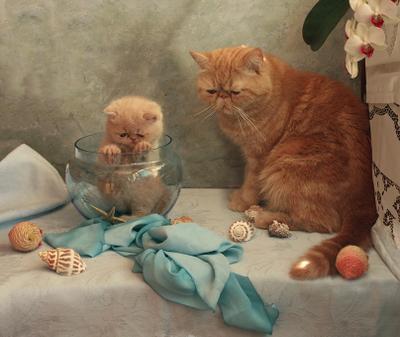 """""""...я больше не буду..."""" котята отцы и дети"""
