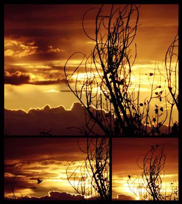 Драра на закате попугай драра закат