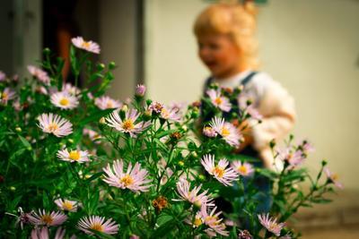Даша и цветы Дети цветы