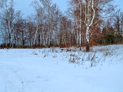 ***Опушка. Снег лес березы опушка
