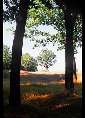 Древца природа