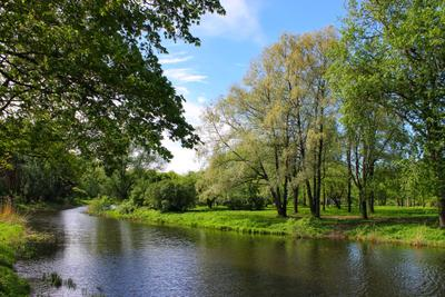 "Парк ""Александрино"" природа пейзаж пруд весна парк"