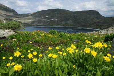 Медвежье место горы природа цветы