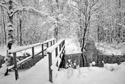 Через зимний лес