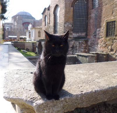 Усталый котик Istanbul Turkey cat
