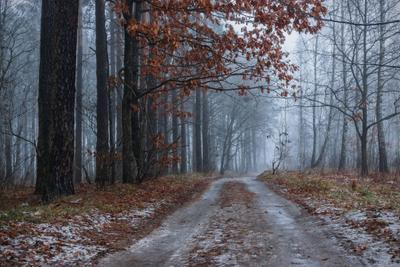 Декабрьские туманы