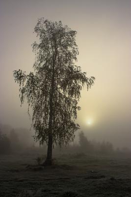***Утро туманное Пейзаж туман утро осень
