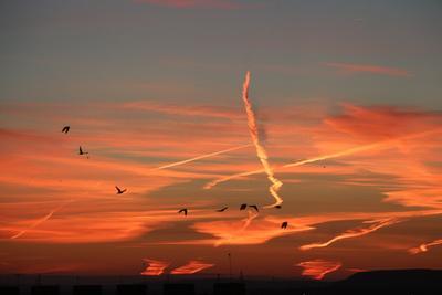 *** небо закат птицы