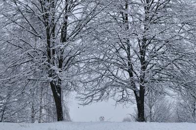 Любопытный снеговик деревья, снег, снеговик