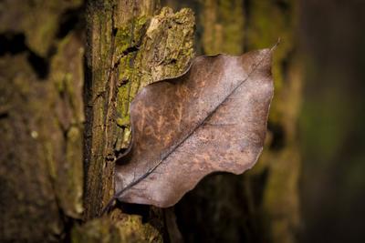 Осенний лист в лесу лист природа Новокубанск лес