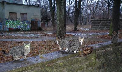 СЛИВЫ и кошки