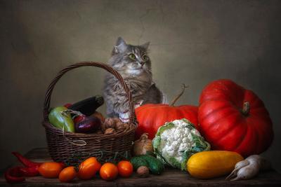 ***Торговка овощами домашние животные кошка Масяня овощной натюрморт осень
