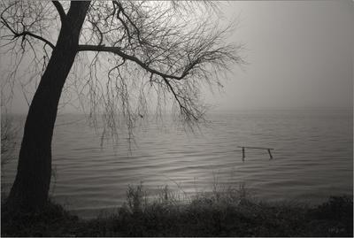 безветрие... природа вода дерево вечер берег