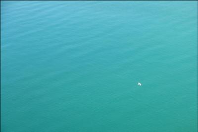 Летом чайка море лето вода