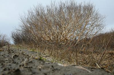 Стройные камчатские берёзки. камчатка природа