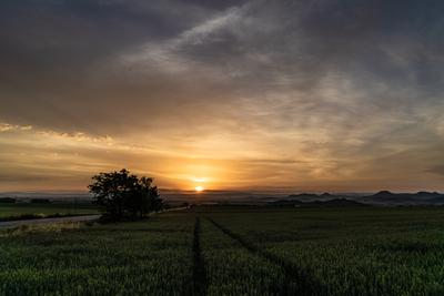 Путь пейзаж поле дерево закат солнце дорога