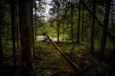 В лесной тишине.... лес лето красота природа.путешествия