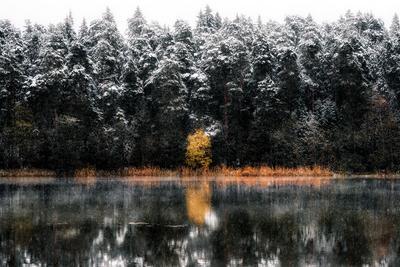 Островок осени