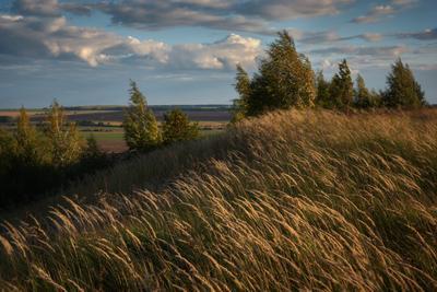 Первые дни осени облака трава берёза осень поле даль овраг