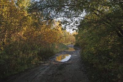 Дождь прошел Лес осень дорога лужи