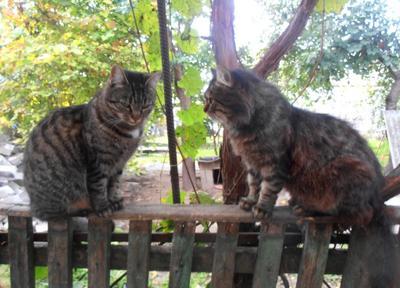 Разговор по существу кошки дома