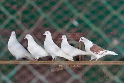Голуби голуби птицы клетка в городе