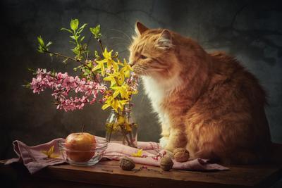 Рыжий эстет натюрморт композиция постановка сцена цветы букет цветение кот питомец друг рыжий
