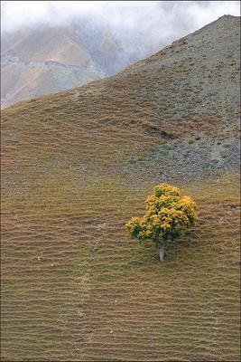 Одинокое дерево Грузия Тушети