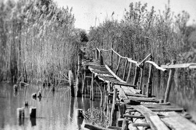 *** природа пейзаж фотопленер мост черно белое фото