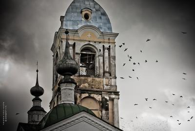 Воронье filin-foto.ru