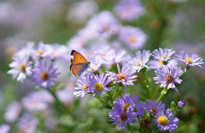 Лето1 природа бабочка лето цветы