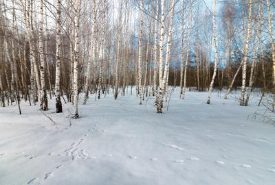 В лесу было натоптано... )
