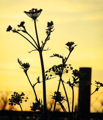 На закате Закат природа жёлтый красочно лето красиво трава sunset nature yellow colorful summer grasss