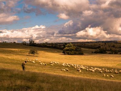 Пастушок Поле отара овец осень Трансильвания