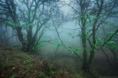 Мистический лес крым осень лес туман пейзаж украина россия ай-петри утро облака
