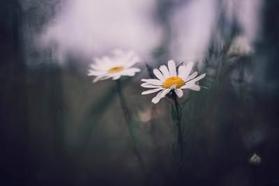 *** гелиос 77-4 природа цветы