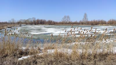 Весна на озере 2 весна озеро лед камыши снег деревья кустарник
