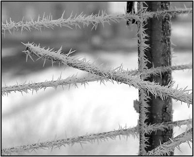 Антенна макро зима