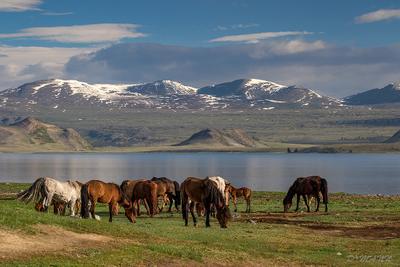 Ходят кони вдоль Хотона Монголия долина горы июнь облака дорога национальный парк Таван Богд памятники аймак Баян Улгий степь озеро Хотон-Нуур кони лошади