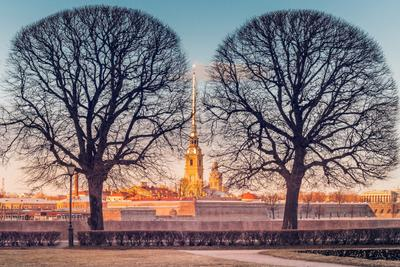 Два весенних дерева Санкт-Петербург вечер река деревья храм шпиль