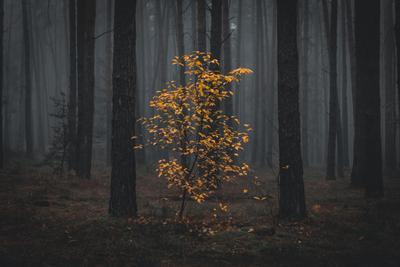 В темно-синем лесу, где трепещут осины... лес деревья осень туман